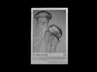 Aurelia Aurita Exhibition Poster