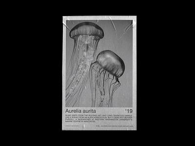 Aurelia Aurita Exhibition Poster photography design typography art poster graphic design graphic typography
