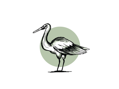 Bird egret illustrated logo design