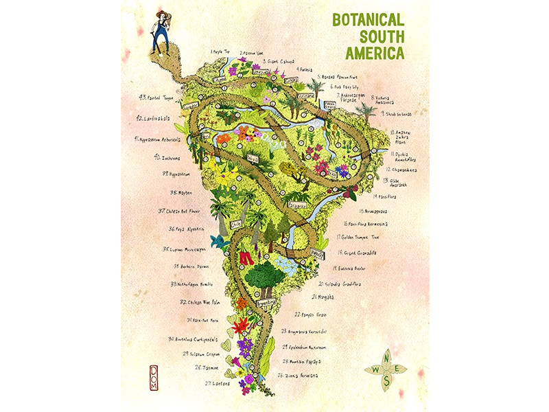 Botanical South America - Illustrated Map illustrated maps advertising editorial infographic map plants adventure poster art direction design illustration
