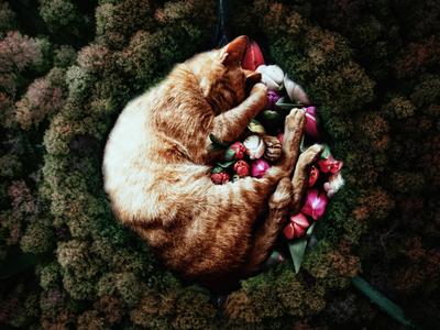 The cat sleeps well