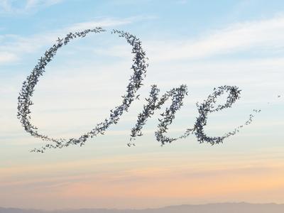 Murmuration of Birds Mock-up