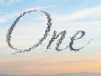 Murmuration of Birds Mock-up