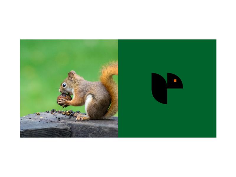 Squirrel Logo animal icon flat graphic design branding design vector logo design logo a day logo