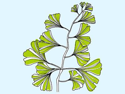 Ginkgo wacompaper green blue illustration drawing handdrawn plant ginkgo