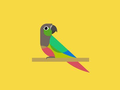 Green-cheeked Conure flat green cheeked conure parrot bird birb