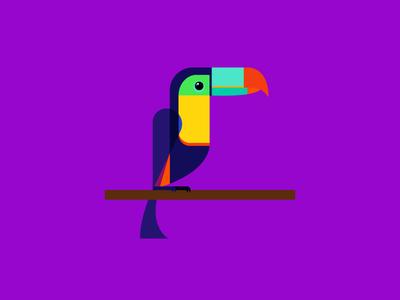Toucan flat bird toucan