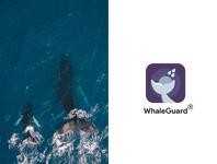Designing iOS app - WhaleGuard 🐋