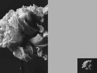 Interfaces — 001 drag flower flowers javascript drag and drop interaction interaction design navigation slider webgl interface