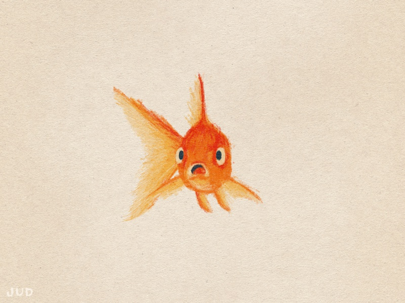 Goldfish Sketch 01 wip shocked scared goldfish fish sketchbook colored pencil judlively sketch illustration