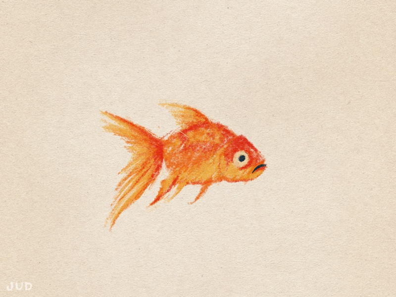 Goldfish Sketch 02 flat character character wip sketchbook sketch jud lively goldfish fish colored pencil