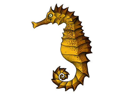 Seahorse illustration hippocampus sea animals animal illustration seahorse drawing illustration