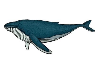 Whale illustration sea animals swim fish ocean sea drawing illustration sea animal whale