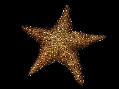 Starfish illustration illustration swim sea life sea animal fish ocean drawing animal illustration sea animals sea seastar starfish