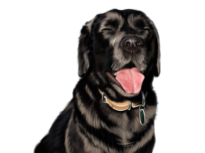 Cute Dog Digital Portrait