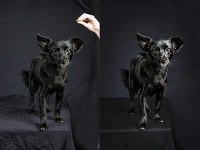 Dog Picture Retouching