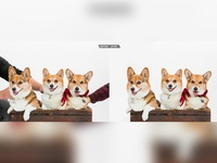 Cute Dog Picture Retouching