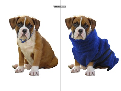 Pet Dog Picture Retouching animal pet dog picture retouch photo edit retouching photo editing editing jatinderkumar f1digitals photoshop