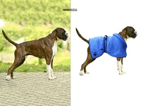 Pet Dog Picture Retouching