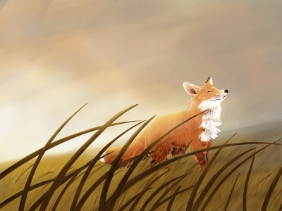 Happy Fox photoshop art photoshop drawing sunrise children book illustration childrens illustration childrens book illustration nature fields field fox
