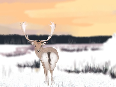 Snow Deer photoshop art photoshop nature art nature deer head deer illustration illustrator book illustration children book illustration childrens book sunset deer snow