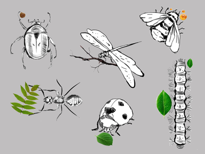 Insects animals green project nature graphic tablet wacom digital draw sketch rough drawing insects