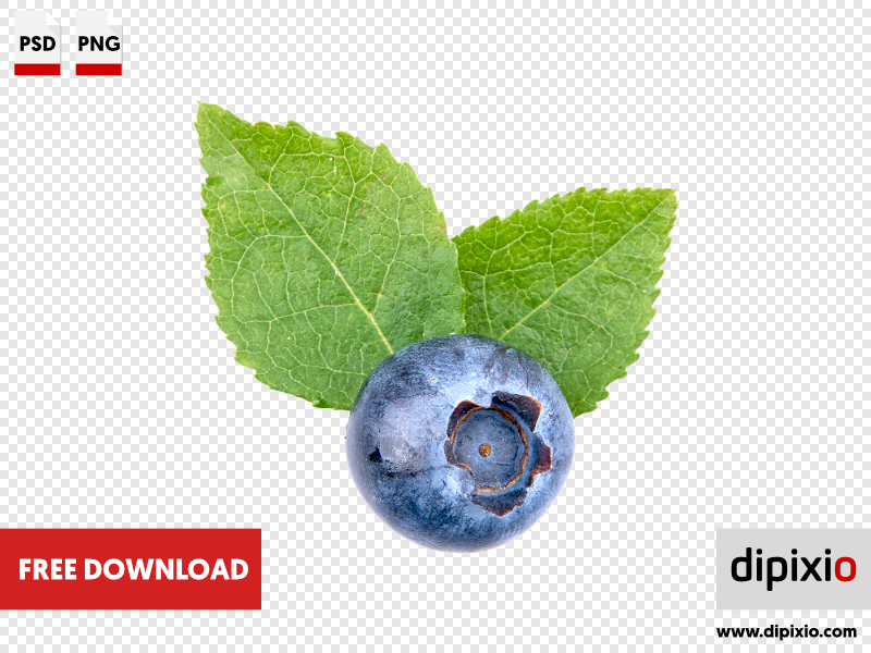Blueberry with leafs