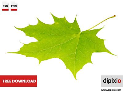 Green maple leaf affinityphoto luminar2018 freeimages pic photos photography freedownload photo freebie freephoto dipixio