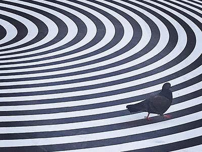 Pigeon pigeon spiral