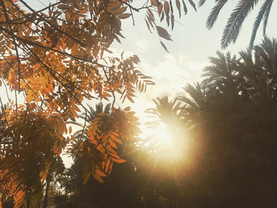 Sun leaves nature sun