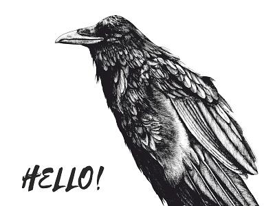 Raven illustration drawing bw bird crow raven