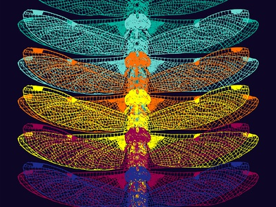 dragonfly rainbow insects black poster dragonfly