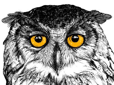 owl illustration eyes bird birds animals owls owl