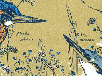 birds drawing illustration animals flowers floral circle bird birds