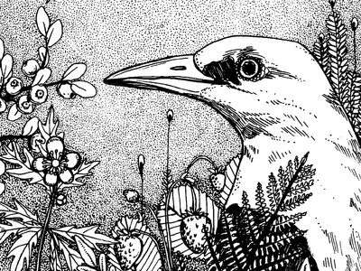 oriolus forest fruits flowers plants fineliner drawing illustration yellow oriolus bird