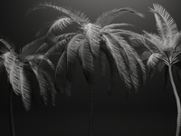 Palm trees, animation of wind