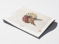 Cuentas Brand Book Cover