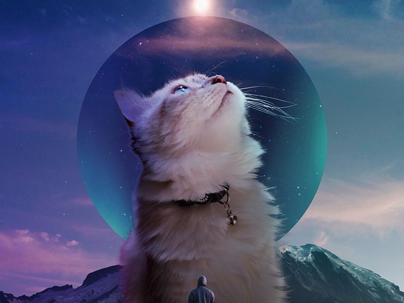 Monkey CAT blue adobe clouds mountain man stars light cat art design surreal photomanipulation digital photoshop
