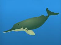 Endangered 07 Indusriverdolphin 800