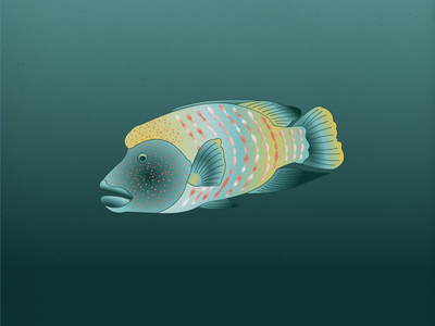 Endangered 09 Humphead Wrasse 100dayproject the100dayproject 100endangeredspecies endangeredspecies illustration
