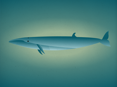 Endangered 11 Sei Whale 100dayproject the100dayproject 100endangeredspecies endangeredspecies illustration