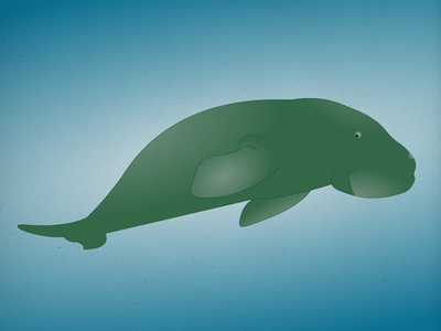 Endangered 12 Dugong 100dayproject the100dayproject 100endangeredspecies endangeredspecies illustration