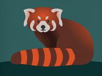 Endangered 14 Red Panda