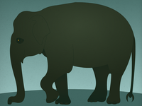 Endangered 15 Indian Elephant
