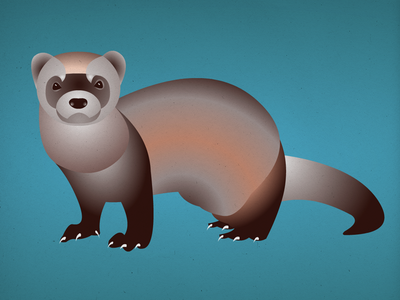 Endangered 17 Black-Footed Ferret 100dayproject the100dayproject 100endangeredspecies endangeredspecies illustration