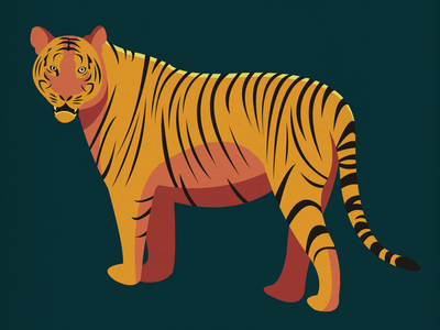 Endangered 25 Tiger 100dayproject the100dayproject 100endangeredspecies endangeredspecies illustration