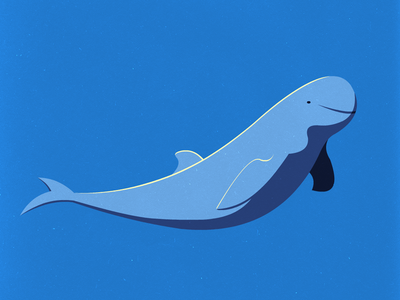 Endangered 26 Irrawaddy Dolphin 100dayproject the100dayproject 100endangeredspecies endangeredspecies illustration