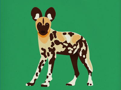 Endangered 27 African Wild Dog 100dayproject the100dayproject 100endangeredspecies endangeredspecies illustration