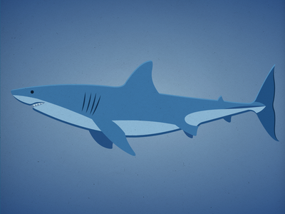 Endangered 29 Great White Shark 100dayproject the100dayproject 100endangeredspecies endangeredspecies illustration