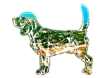 Hank aka Beagle Juice - 3 hank dog photography beagle tshirt key west